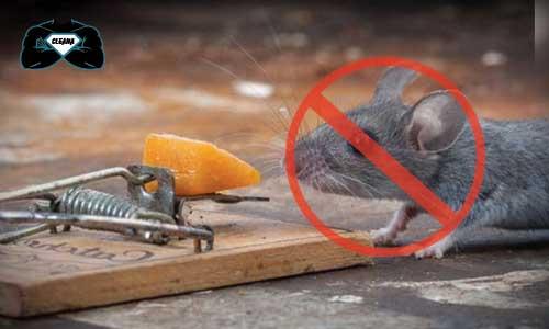 شركة مكافحة فئران بالكويت العاصمة،أقوى شركة قضاء على الفئران في الكويت،شركة مكافحة فئران بأقوى المبيدات الكويت